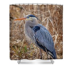 Great Blue Heron Shower Curtain by Bill Wakeley