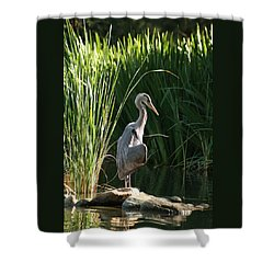 Great Blue Heron Shower Curtain by Ellen Henneke