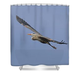 Great Blue Heron In Flight-2 Shower Curtain by Thomas Young