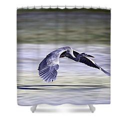 Shower Curtain featuring the photograph Great Blue Heron In Flight by John Haldane