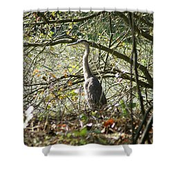 Shower Curtain featuring the photograph Great Blue Heron by Karen Silvestri