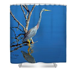 Tricolored Heron Shower Curtain by Nikolyn McDonald