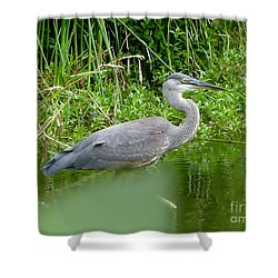 Shower Curtain featuring the photograph Great Blue Heron  by Susan Garren