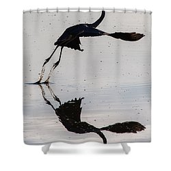 Great Blue Heron Takeoff Shower Curtain by John Daly