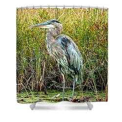 Great Blue Heron Waiting For Supper Shower Curtain