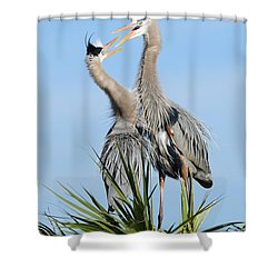 Great Blue Herons At Nest Open Bills Shower Curtain