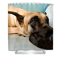 Great Dane Dog On Sofa Shower Curtain