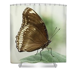 Great Eggfly Butterfly Shower Curtain by Judy Whitton