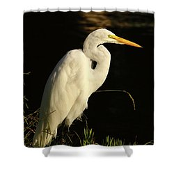 Great Egret At Morning Shower Curtain by Robert Frederick