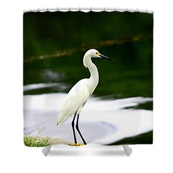 Shower Curtain featuring the photograph Great Egret by Debra Forand