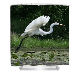 Great Egret Elegance   Shower Curtain