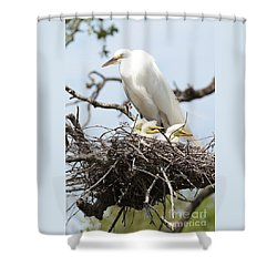Great Egret Nest With Chicks And Mama Shower Curtain by Carol Groenen