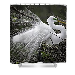 Great Egret Preening Shower Curtain by Fran Gallogly