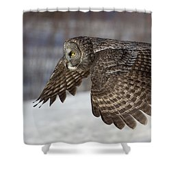Great Grey Owl In Flight Shower Curtain by Jakub Sisak