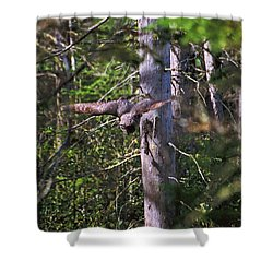 Great Grey Owl Pounces  Shower Curtain