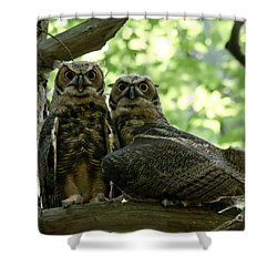 Great Horned Owls Shower Curtain by Cheryl Baxter