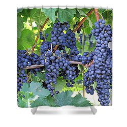 Great Lakes Vineyard Near Lake Erie Shower Curtain