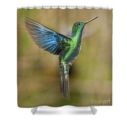 Great Sapphirewing Hummingbird Shower Curtain by Dan Suzio