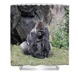 Shower Curtain featuring the photograph Great Silverback Gorilla by John Black