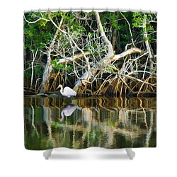 Great White Egret And Reflection In Swamp Mangroves Shower Curtain