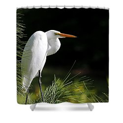 Great White Egret In The Tree Shower Curtain by Sabrina L Ryan