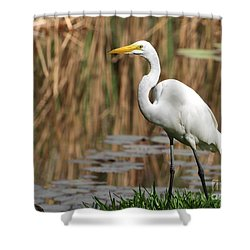 Great White Egret Taking A Stroll Shower Curtain by Sabrina L Ryan