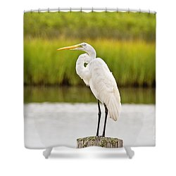 Great White Heron Shower Curtain by Scott Pellegrin