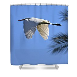 Shower Curtain featuring the photograph Great White In Flight by Penny Meyers