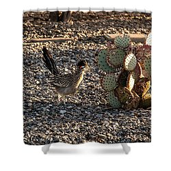 Greater Roadrunner Shower Curtain by Robert Bales