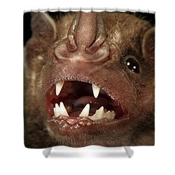 Greater Spear-nosed Bat Shower Curtain by Christian Ziegler