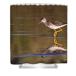 Greater Yellow Legs Shower Curtain