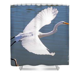 Greeat Egret Flying Shower Curtain by Thomas Marchessault