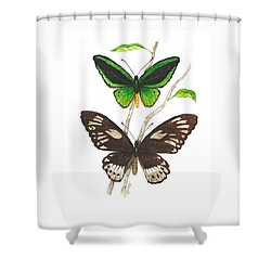 Green Birdwing Butterfly Shower Curtain by Cindy Hitchcock