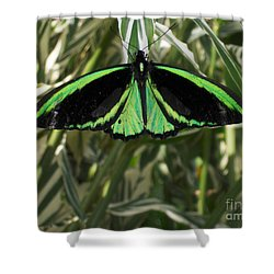 Shower Curtain featuring the photograph Green Butterfly by Brenda Brown