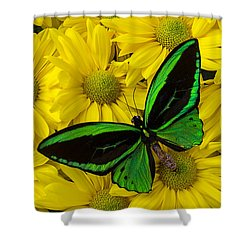 Green Butterfly On Yellow Mums Shower Curtain by Garry Gay