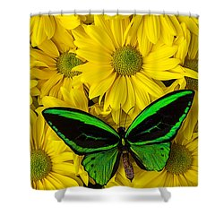 Green Butterfly Resting Shower Curtain by Garry Gay