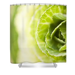 Green Cabbage Shower Curtain by Anne Gilbert