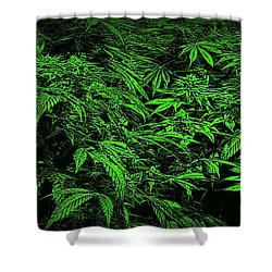 Green Canna Dream Shower Curtain