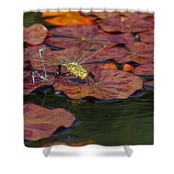 Shower Curtain featuring the photograph Green Darner Dragonfly With Friends by Rona Black