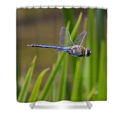 Green Darner Flight Shower Curtain by David Lester