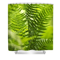 Green Fern Art Shower Curtain by Christina Rollo