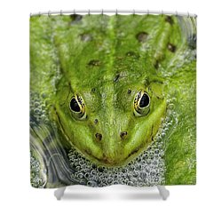 Green Frog Shower Curtain by Matthias Hauser