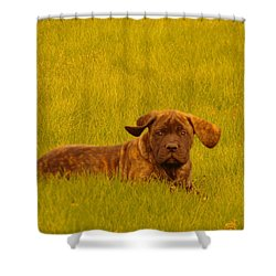 Green Grass And Floppy Ears Shower Curtain by Jeff Swan