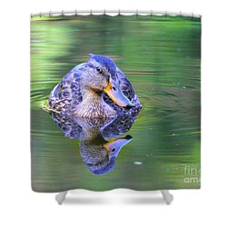 Green-headed Duck At Sunset Shower Curtain
