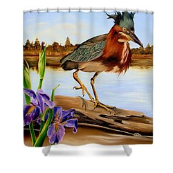 Shower Curtain featuring the painting Green Heron Dance by Phyllis Beiser