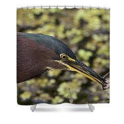 Green Heron Fishing Shower Curtain