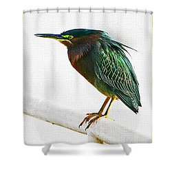 Green Heron In Scottsdale Shower Curtain by Tom Janca