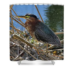 Green Heron  Shower Curtain by Mariola Bitner