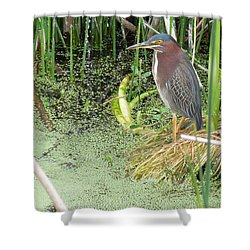 Shower Curtain featuring the pyrography Green Heron by Ron Davidson