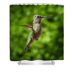 Green Hummingbird Shower Curtain